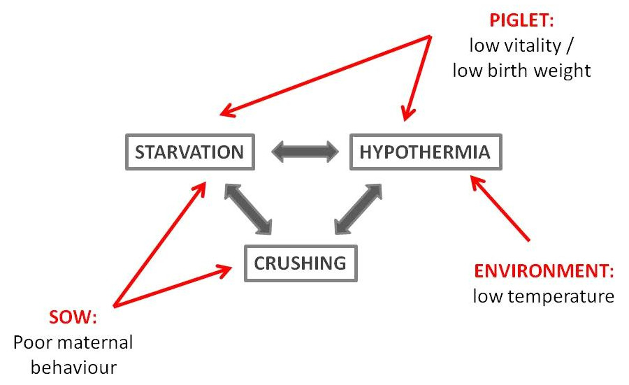 THE HYPOTHERMIA-STARVATION-CRUSHING COMPLEX